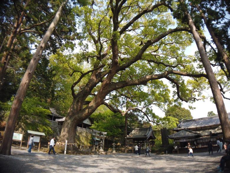 広角レンズありで撮影した杉の写真